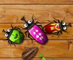 Aşık Böcekler